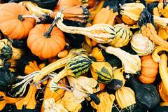 2588 Gourds