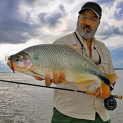 Ruy Varella com uma bela piracanjuba fisgada no fly em Ita Ibate-AR  #pescaamadora #pesqueesolte #baitcast #fly #pescaesportiva #sportfishing #piracanjuba #flyfishing #fish #fishing #angler #anglerapproved #monsterfish #bigfish #argentina #itaibate #bait