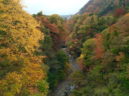 autumn nature japan 紅葉 秋 sendai 自然 miyagi 宮城県 仙台市青葉区
