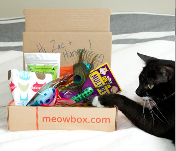 meowbox-11-22-15