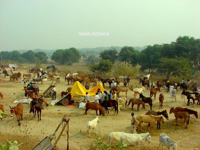 Animal Fair: Mules / Donkey Fair: A Green and Clean View