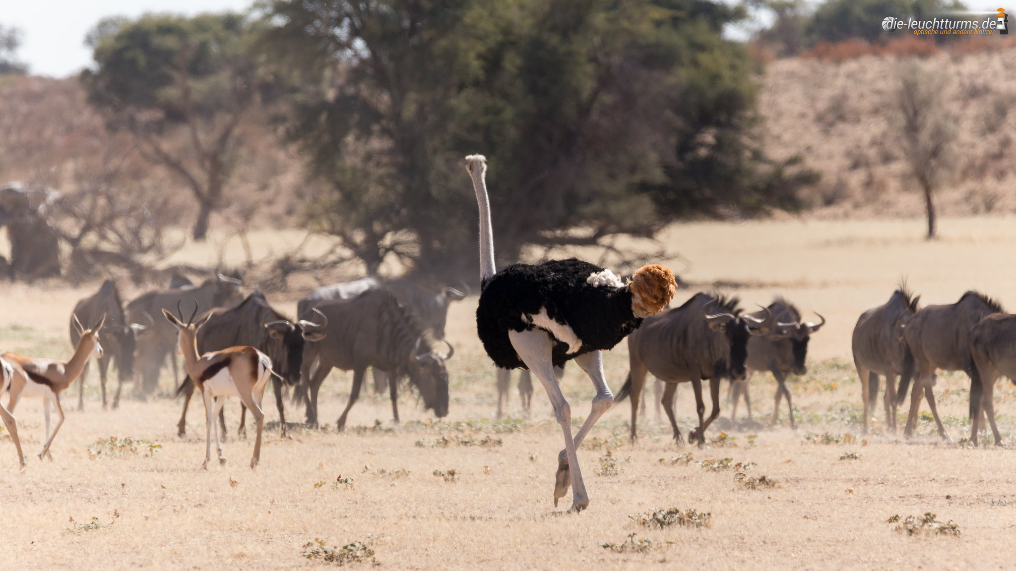 Kalahari impressions