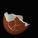 eggshell by Bluesrose