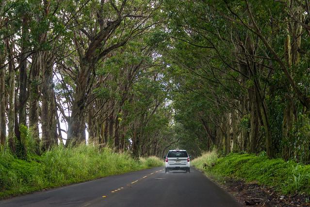 Driving in Kauai, Hawaii, USA