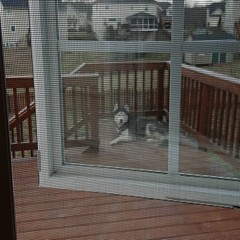Jackola is loving his new back porch situation