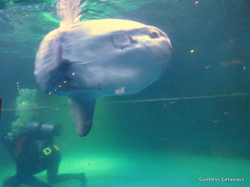 sunfish-busan.jpg
