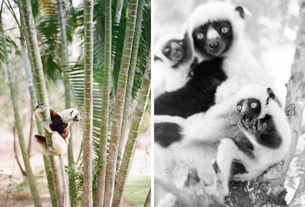 RYALE_Madagascar_Blog1_009