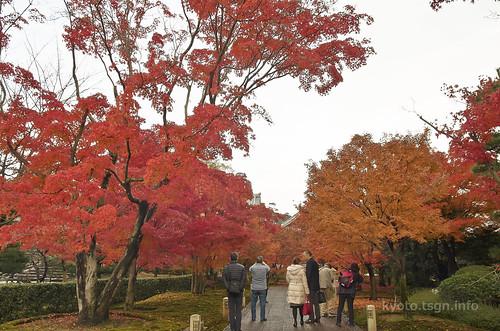【写真】2014 紅葉 : 智積院/2020-09-07/IMGP7543