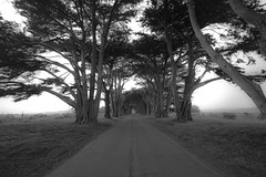 Overprocessed Cypress Tunnel
