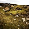 Hanging out in Achill. #sheep #ireland