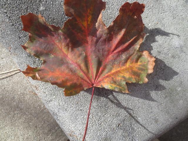All of fall in one leaf