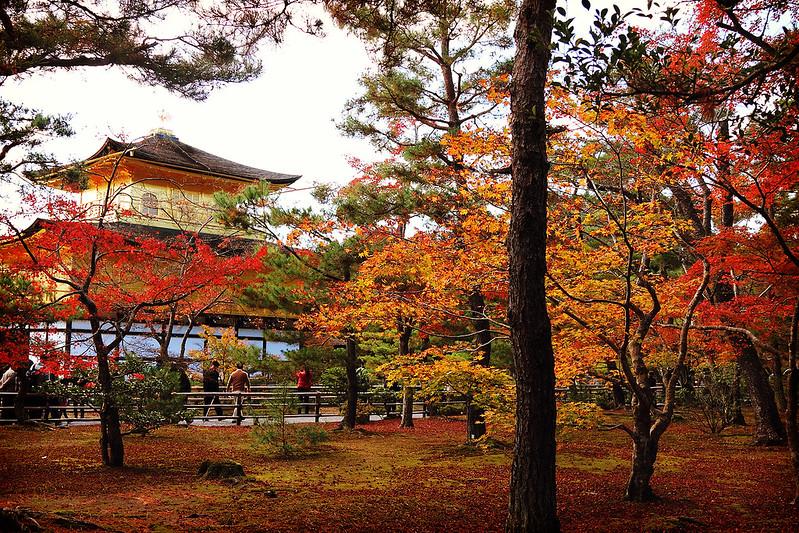金閣寺と紅葉