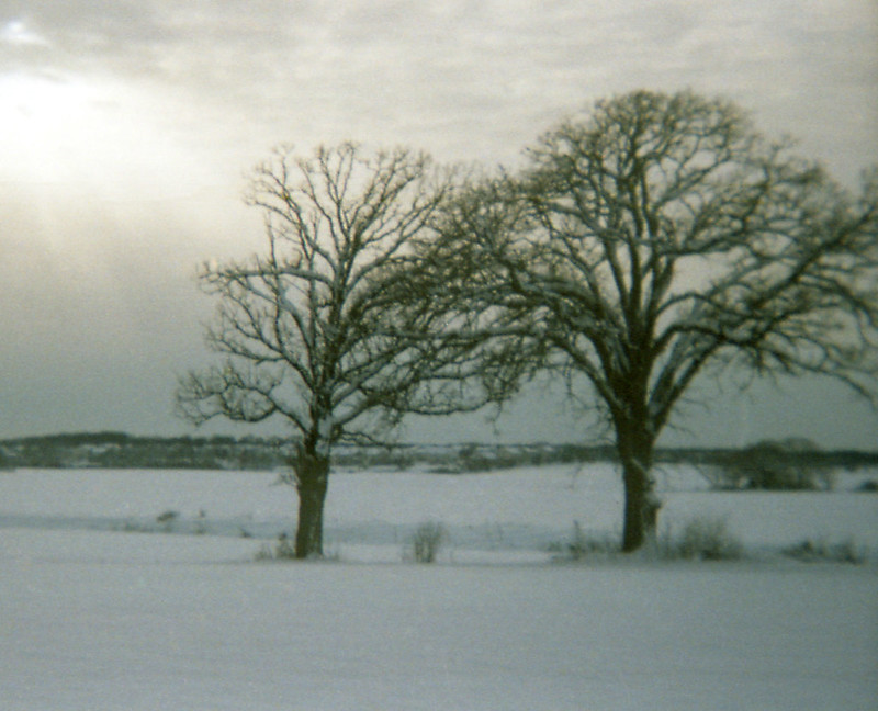 Field of Snow and Trees