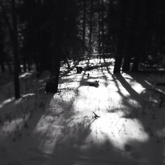 cibola national forest snow