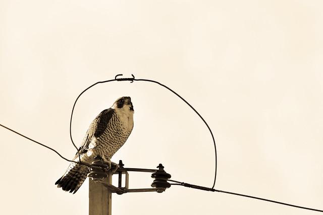A BIRD #3