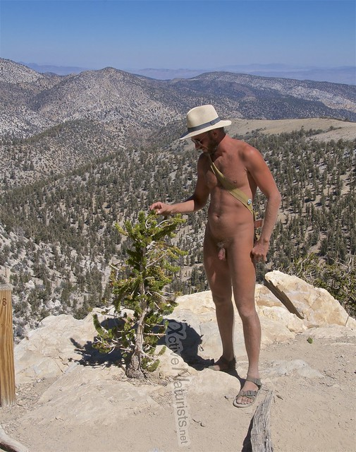 naturist 0005 Ancient Bristlecone Pine Forest, California, USA