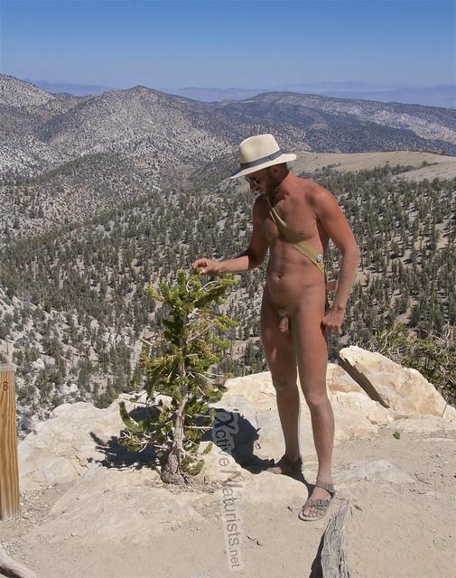 naturist 0005 Ancient Bristlecone Pine Forest, California, USA