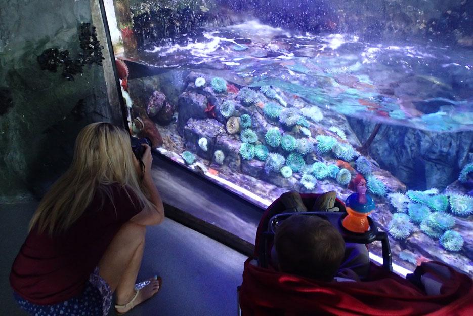 070915_aquarium14