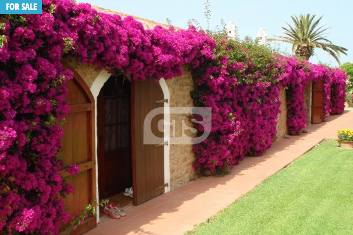 Haute Residences in Spain, purple flowers