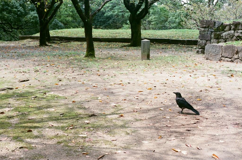 烏鴉 熊本城 熊本 Kumamoto 2015/09/06 烏鴉,都不飛,只好把你拍的很孤獨 ...  Nikon FM2 / 50mm AGFA VISTAPlus ISO400 Photo by Toomore