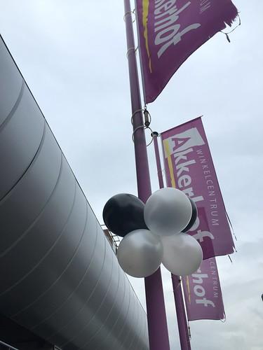 Diverse Ballonbloem Plus Akkerhof Spijkenisse