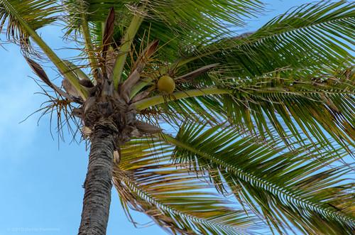 sky sunrise places aruba holidayinn caribbean palmbeach pentaxk5 smcpdfamacro100mmf28wr