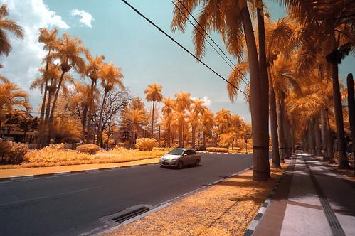 Jalan Ijen Malang