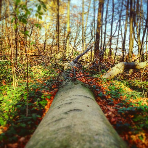 Stammbaum. #tree #wood #forest #wald #colours #nature #inlove #goodtimes #happy #landscape #igersaustria #instadaily #instamood