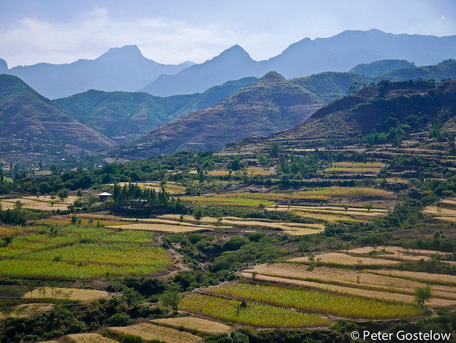 Green and cultivated terraces.