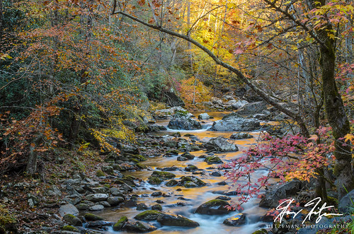 autumn trees plant color tree green fall texture leaves yellow vertical sunrise reflections river landscape happy golden moss artwork october whitewater unitedstates outdoor tennessee award rapids foliage boulders serene streams aspen decor townsend aspentrees greatsmokymountainsnationalpark honorablemention cacca mayslake tennesseeart hitzemanphotographycom harryhitzeman