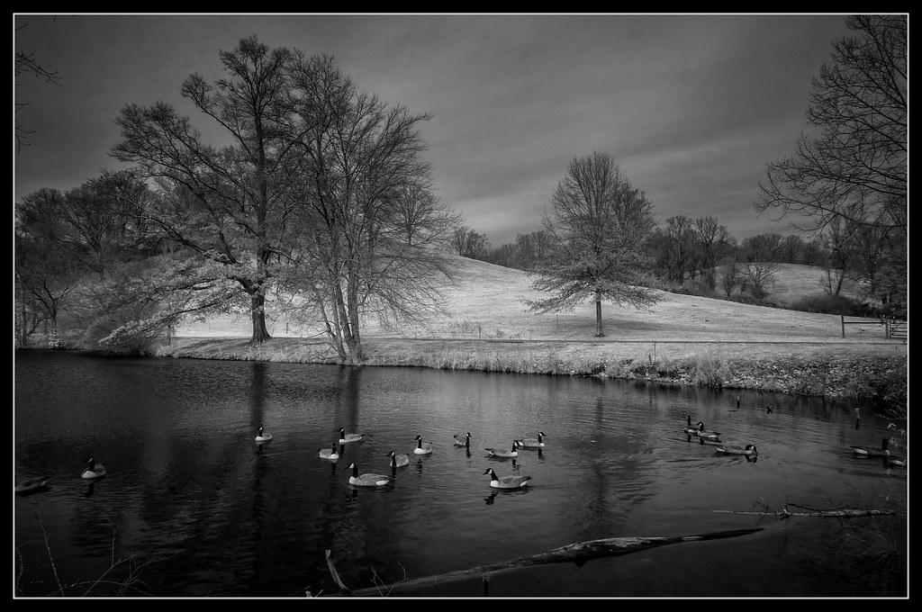 The Lagoon at The Biltmore Estate (Asheville, North Carolina)