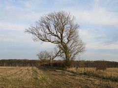December Hedgerow