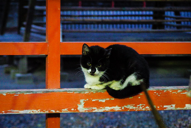 Today's Cat@2015-12-11