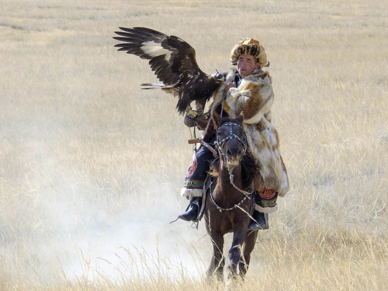 A Kazakh Eagle Hunter.