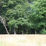 sunnyside woods