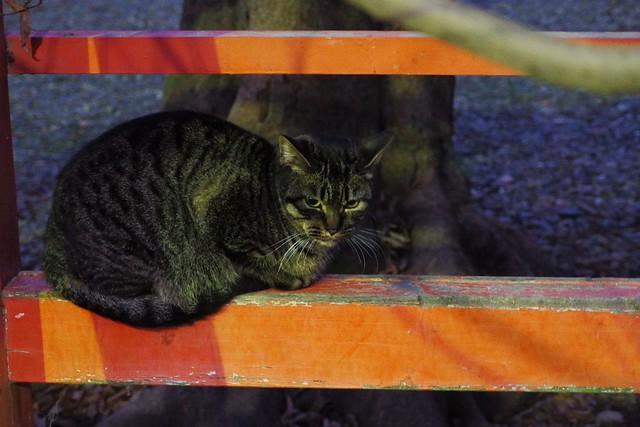 Today's Cat@2017-01-12