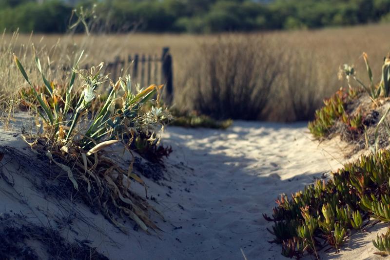 Gaspacho e dias de praia