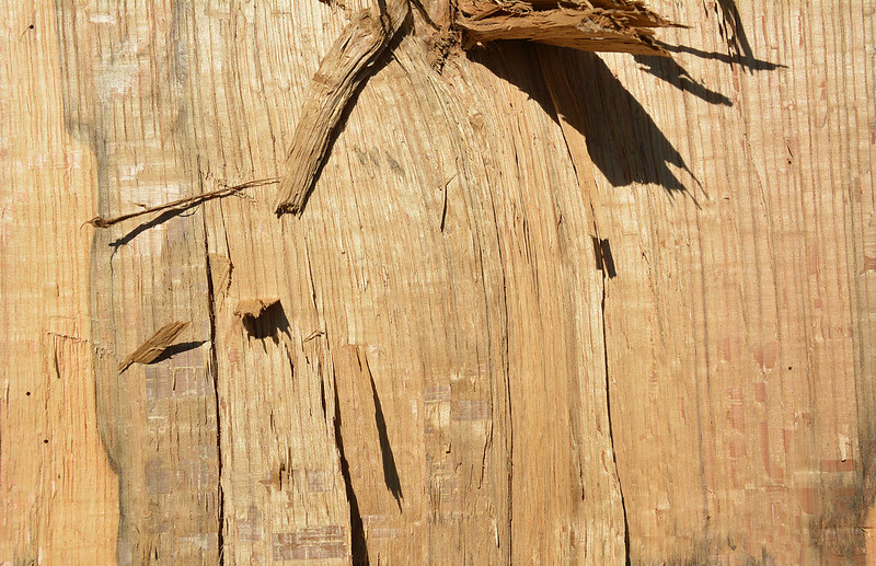 Wood Texture #4