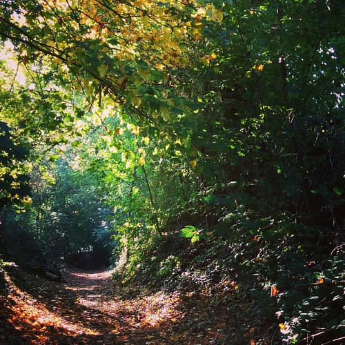 🚶🍃🍂🍁🌳 🌌 #autumnlove #zondagswandeling #hiking #boswandeling