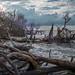 Folly Beach Driftwood by Vitaliy973