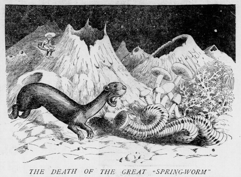 "Walt McDougall - The Salt Lake herald., October 11, 1903, The Death Of The Great ""Spring-Worm"""
