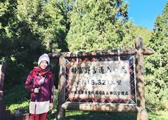 2015_11 阿里山_特富野古道 02