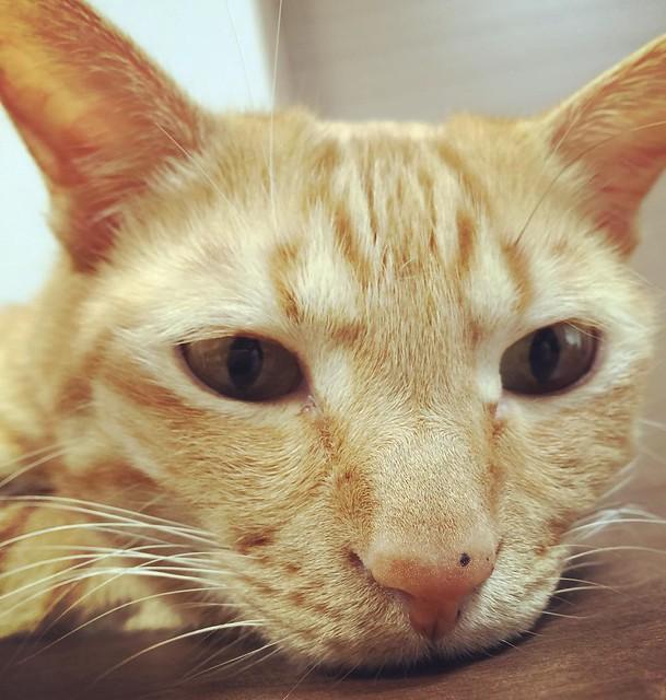 #cat #猫 #ねこ 😸😸😸