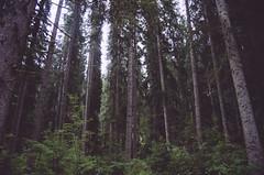 """""""Fino agli alberi sottili"""""""
