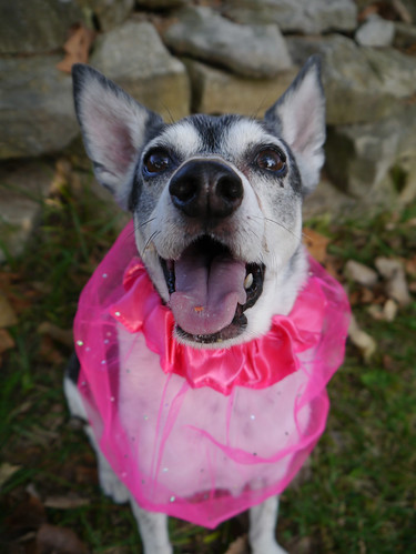 2015-09-16 - Peedee in Pink - 0026 [flickr]