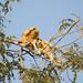Pantanal-8561 by sandiagu307