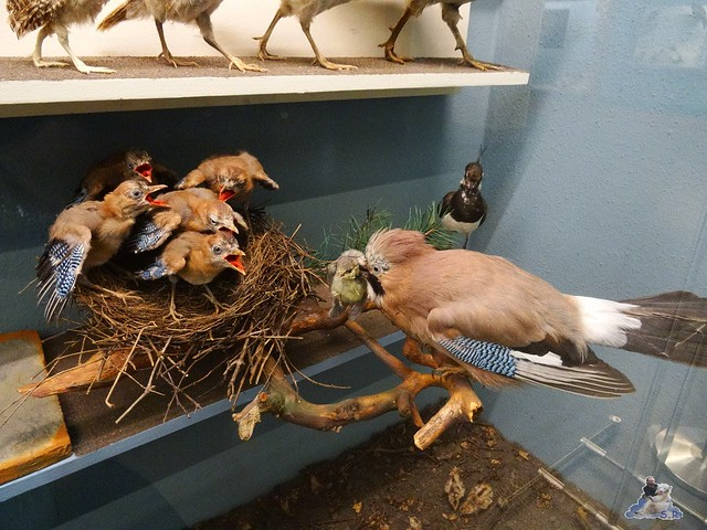Naturkunde Museum Berlin 17.07.2015  087