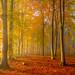Hello November ( Nikon D7200 ) by Adelino Goncalves