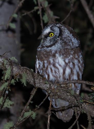 newmexico birds unitedstates owls tierraamarilla