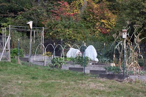 fall garden IMG_4445